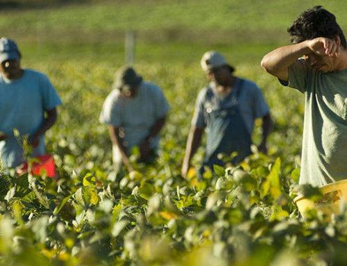 """""""prestO"""" – come funzionano i voucher in agricoltura"""